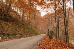 Paceful-Straße durch den bunten Herbstwald Lizenzfreie Stockfotos