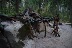 Pach del ¡ di AdrÅ (¡ LY dello skà dello ské del ¡ del paÅ del ¡ di AdrÅ) Fotografia Stock