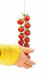 Pachino dos tomates fotografia de stock