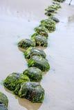 Pachwina w morzu bałtyckim obraz royalty free