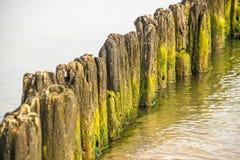 Pachwina w morzu bałtyckim obrazy stock