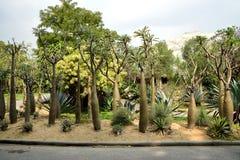 Pachypodium lamerei Royaltyfria Bilder