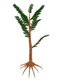 Pachypteris prehistoric plant - 3D render Stock Photo