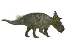 Pachyrhinosaurus strony profil Zdjęcia Royalty Free