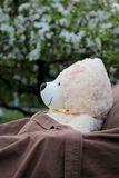 Paciente enfermo del oso de la felpa que descansa al aire libre Fotos de archivo libres de regalías