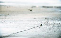 pacific Стоковые Фотографии RF