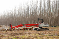 Pacific Albus Loader Royalty Free Stock Photo