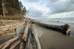Pacific coast beach Royalty Free Stock Photo
