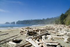 Pacific coast sand beach. Fog is coming from the open pacific ocean on the beach and into the boreal rainforests of the west coast of vancouver island Royalty Free Stock Photos
