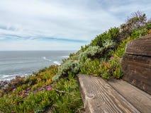 Pacific Coast Scene from a Dream Stock Image