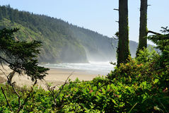 The Pacific coast. USA. Oregon. Fog Stock Photography