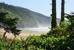 The Pacific coast. USA. Oregon. Fog Stock Photography