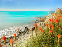 Pacific Coastline and Red Flowers Stock Photography