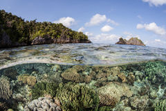 Pacific Coral Reef Diversity. A diverse tropical Pacific coral reef thrives in Raja Ampat, Indonesia. The islands of Raja Ampat are within the Coral Triangle and Stock Image
