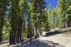 The Pacific Crest Trail. The famous Pacific Crest Trail junction saw at Devils Postpile National Monument Stock Photo