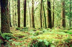 Pacific Forest. The thick wet forest of Oregons Pacific Northwest Stock Photo