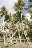 Pacific Island Palms Stock Photos