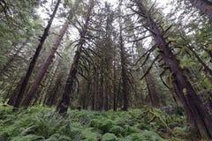 Pacific Northwest τροπικών δασών Στοκ Εικόνες