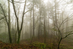 Pacific Northwest Foggy Morning Forest Scene Royalty Free Stock Images