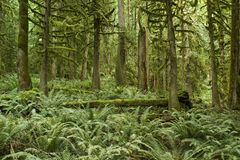 Pacific Northwest Forest Stock Photo