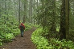 Pacific northwest forest hiker royalty free stock photography