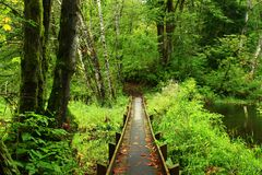 Pacific Northwest forest hiking trail. A exterior picture of an Pacific Northwest forest hiking trail royalty free stock images