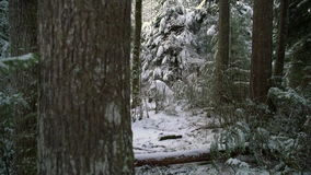 Pacific Northwest Forest Snow dolly shot 4K UHD stock footage