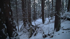 Pacific Northwest Forest Snow 4K UHD stock video footage