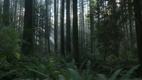 Pacific Northwest Forest Sun Flare dolly shot left stock footage