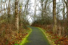 Pacific Northwest forest trail Royalty Free Stock Images