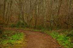 Pacific Northwest forest trail Royalty Free Stock Image