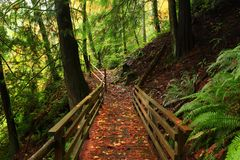 Pacific Northwest forest trail. A picture of an Pacific Northwest Washington state forest hiking trail Stock Photo