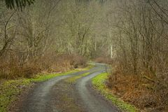 Pacific Northwest forest trail. A picture of an Pacific Northwest Washington state forest hiking trail stock images