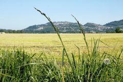 Pacific Northwest Grassland Royalty Free Stock Image