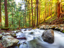 Pacific Northwest Mountain Creek Royalty Free Stock Photos