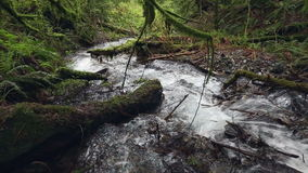 Pacific Northwest Mountain Creek dolly shot. Dolly shot of a rushing mountain stream in a Pacific Northwest rainforest. United States stock footage