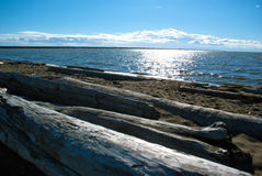 Pacific Northwest ocean beach south of Vancouver with driftwood. Around noon Stock Photos
