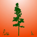 Pacific northwest pine old growth evergreen tree silhouette Stock Photos