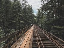 Pacific Northwest railroad tracks through the forest stock image