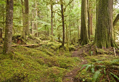 Pacific Northwest Rain Forest Royalty Free Stock Photos