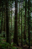 Pacific northwest rain forest Stock Photo