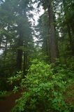 Pacific Northwest Rainforest stock photos