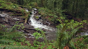 Pacific Northwest Rainforest and Lush Undergrowth. Dolly shot of a rushing mountain stream in a Pacific Northwest rainforest. United States stock video