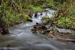 Pacific Northwest Rainforest Rushing Creek Royalty Free Stock Photo