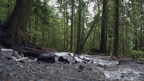 Pacific Northwest Rainforest Rushing Stream dolly shot. Dolly shot of a rushing mountain stream in a Pacific Northwest rainforest. United States stock footage