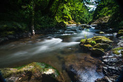 Pacific Northwest River Creek Royalty Free Stock Photos
