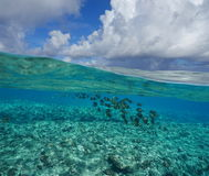 Pacific ocean above and below water surface Royalty Free Stock Photography
