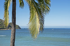 Pacific Ocean coast with palm tree royalty free stock photos