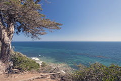 Pacific Ocean from a Coastal Cliff Stock Photography