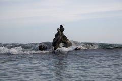 Pacific ocean sea birds Cormorant and Pelicans on rocks big wave Royalty Free Stock Photo